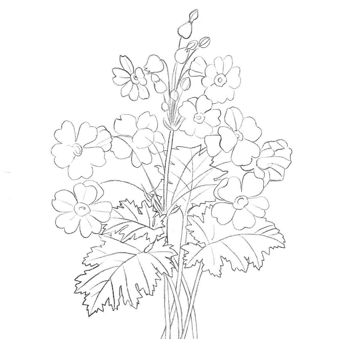 Natalie Malan modern watercolor botanical DIY watercolor flowers ...