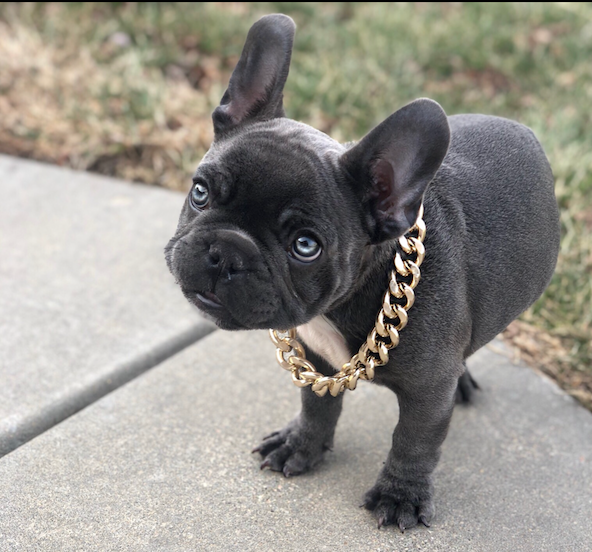 Cuban Link Dog Chain Custom Dog Chain Handmade Dog Collar Dog