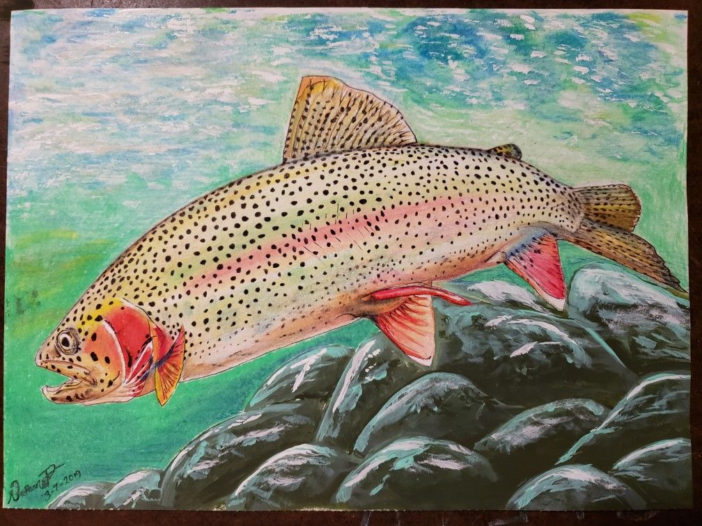 Rainbow Trout Fishing Art Trout Art Colored Pencil Art Mixed