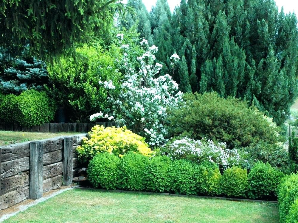Evergreen Bushes For Privacy Landscaping Shrubs For Privacy Hedging Screen Plants Evergreen In The 2 5 Me Shrubs For Privacy Privacy Landscaping Privacy Plants