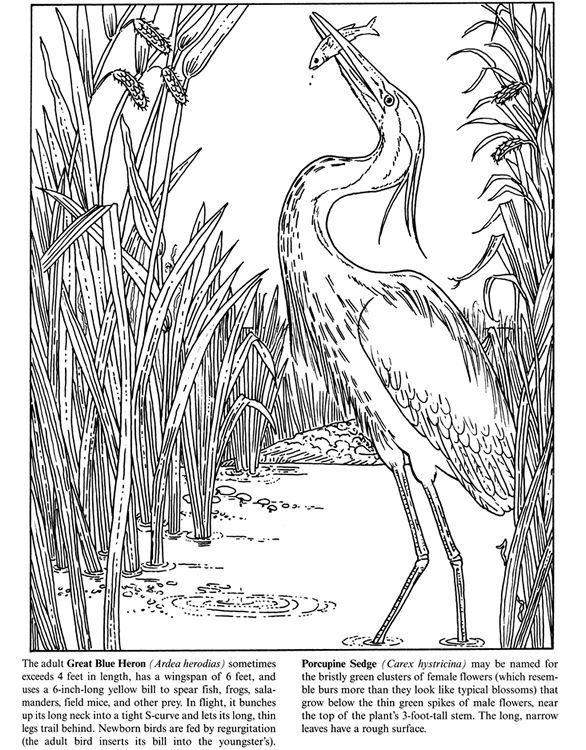 Welcome To Dover Publications Freshwater Pond Coloring Book Bird