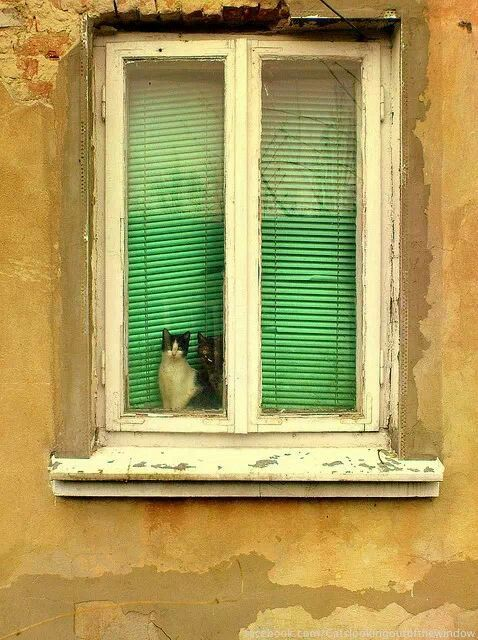 =^. ^= ❤ Cats in the window