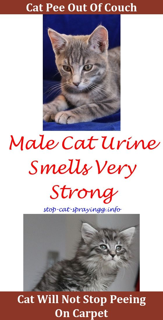 Genial What To Spray To Keep Cats From Peeing How To Get Cat Urine Smell Out Of