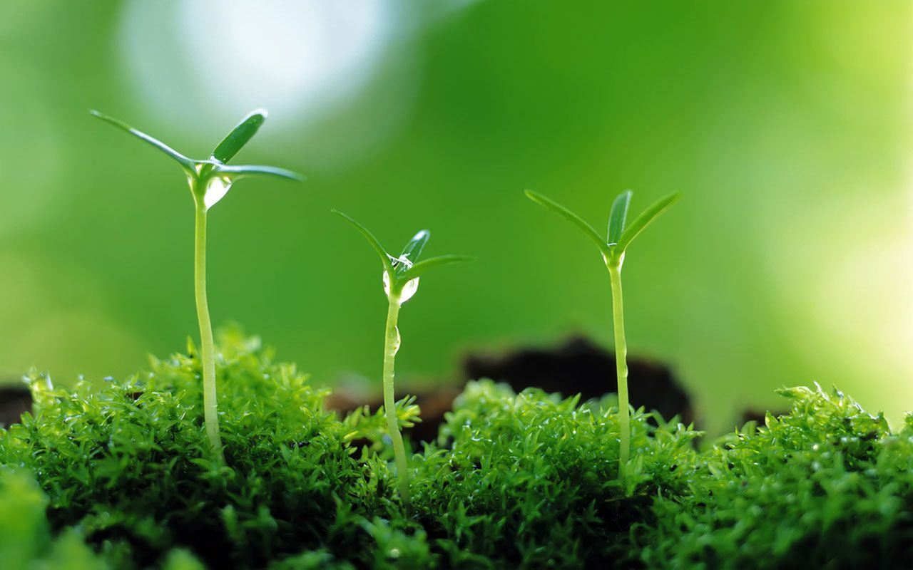 Ultra Hd Plant 4k Pictures 1280x800 Px Green Nature Wallpaper Plants Green Nature