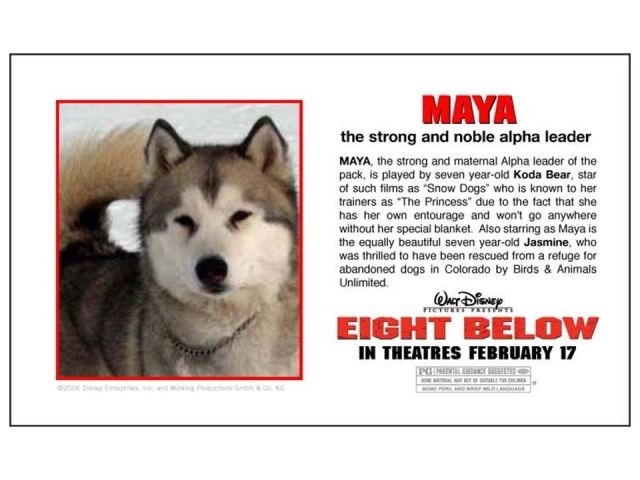 Eight Below Husky Lover Snow Dogs Wolf Dog