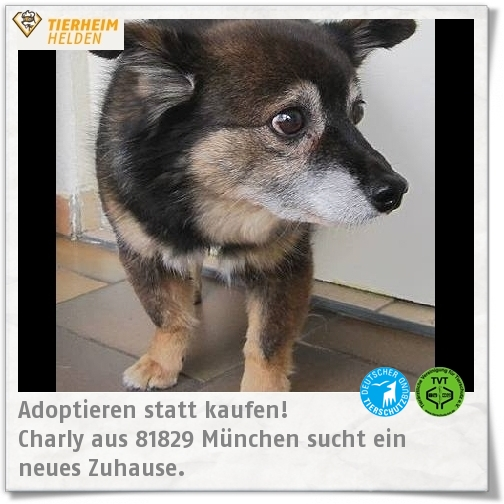 Pin Auf Adoptable Pets Or For Fostering Please Look And Share
