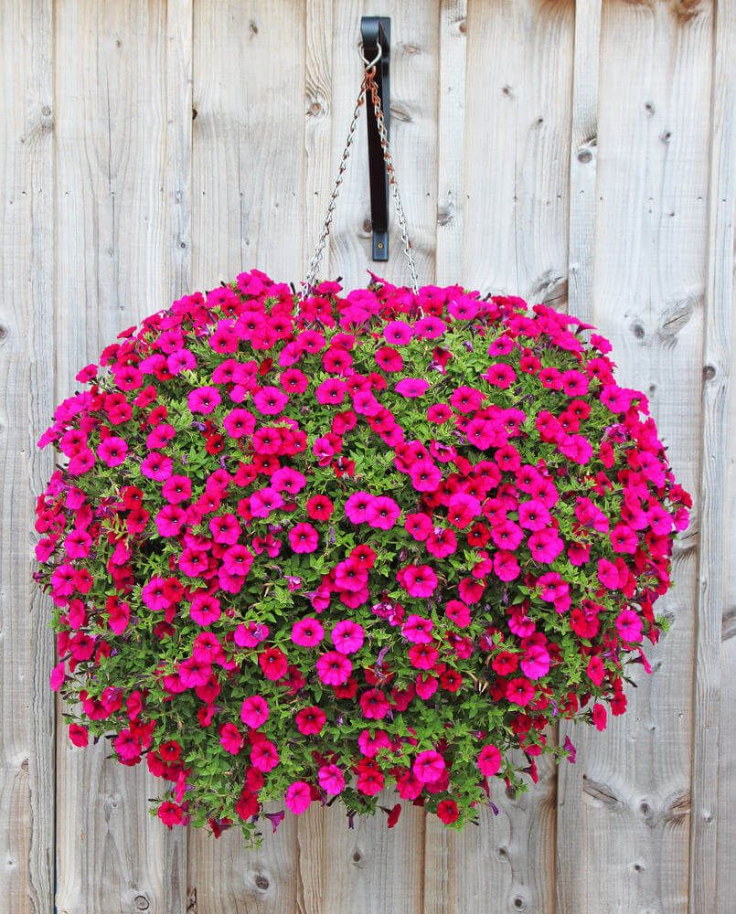 70 Hanging Flower Planter Ideas Photos And Top 10 Flower Pots