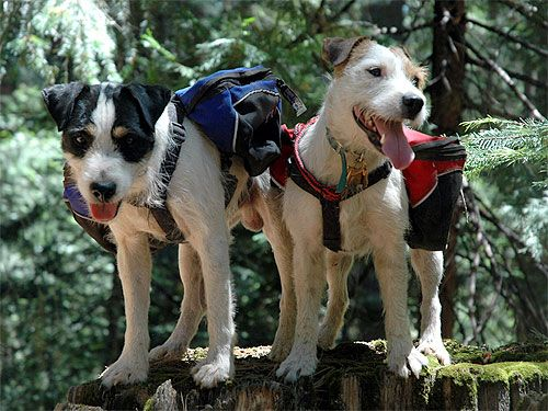Dog Packs Packs for small dogs C&ing and Hiking Gear for Dogs Dog Packs. & Mighty Mite Dog Gear sells dog packs! | Dog Tents | Pinterest ...