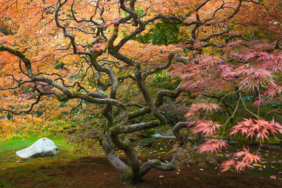 Fall Color in Seattle's Japanese Garden Seattle japanese