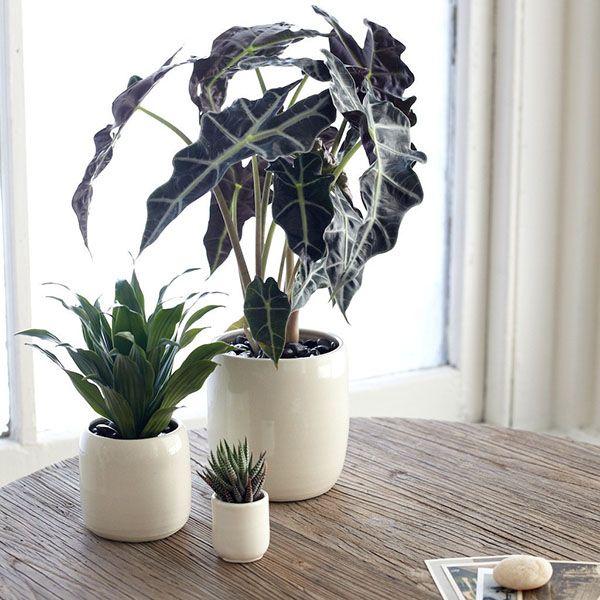 modern office plants. The Sill\u0027s \ Modern Office Plants B