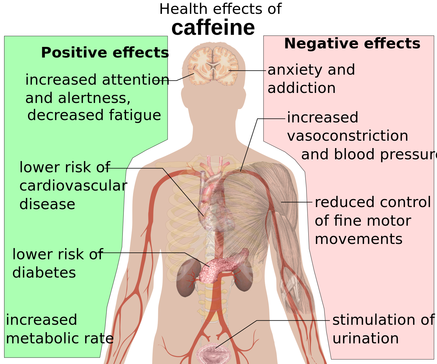 This Is Your Body On Energy Drinks Caffeine Effects Vasoconstriction Health