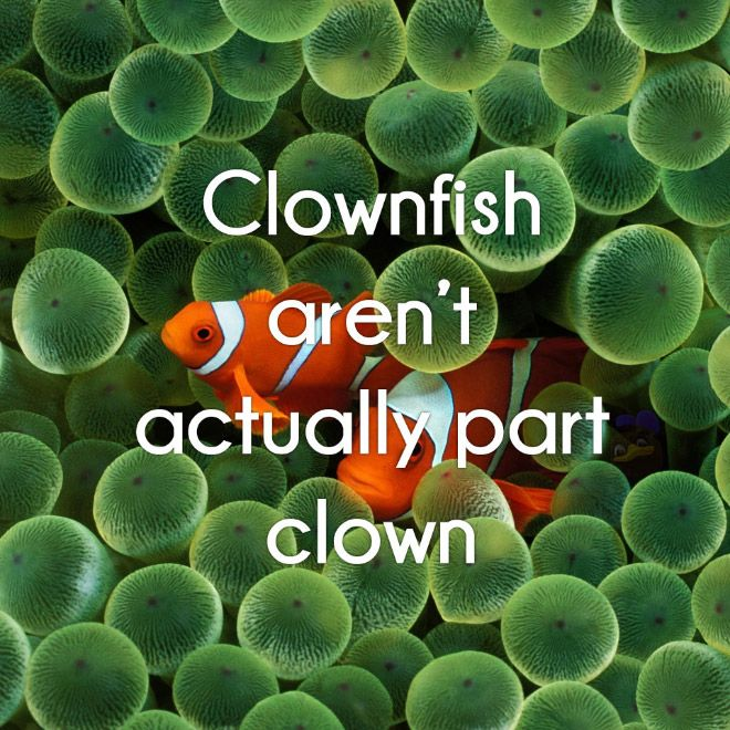 9 Mind Blowing Facts Fish Wallpaper Clown Fish Underwater