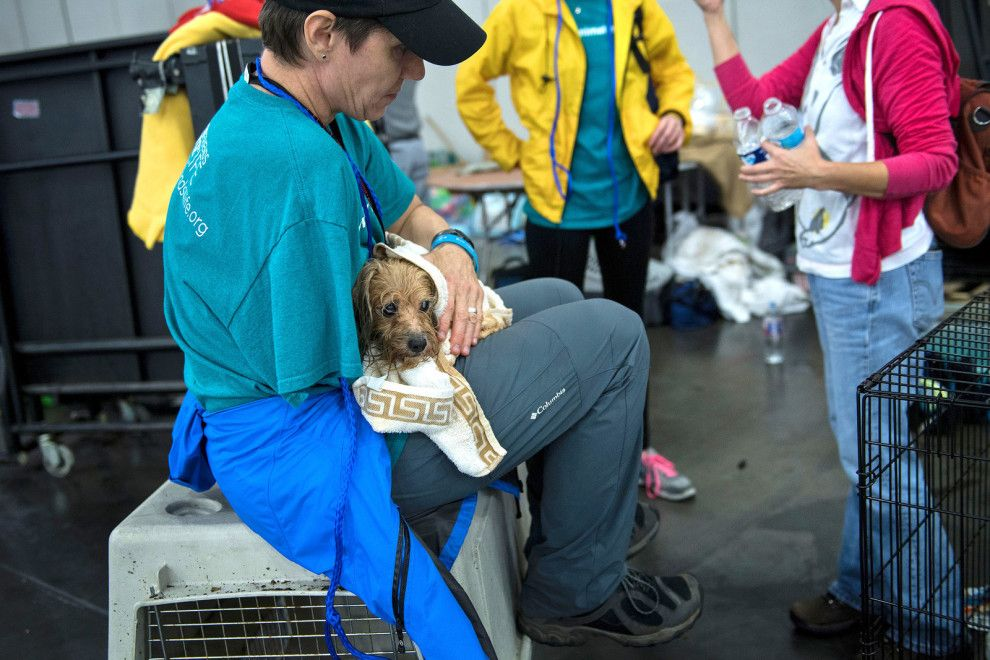 30 Heartbreaking Pictures Of Animals Affected By Harvey Animal Rescue Pets Dog Essentials