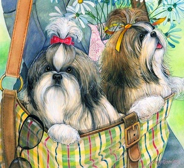 Amy Rosenberg Puppy Art Pet Artist Shih Tzu