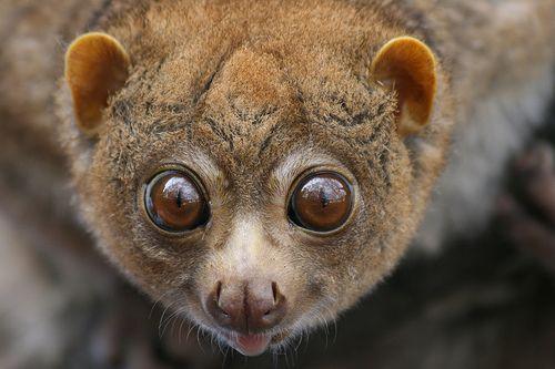 Sexecutioner S Favorites Big Eyed Animals Cute Small Animals Animals