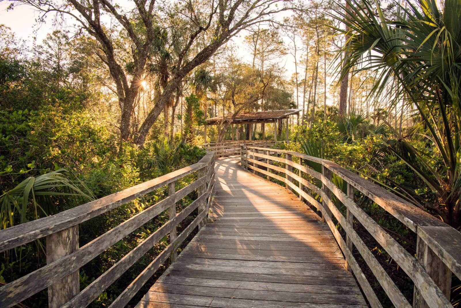 Audubon Corkscrew Swamp Sanctuary in Naples | Travel