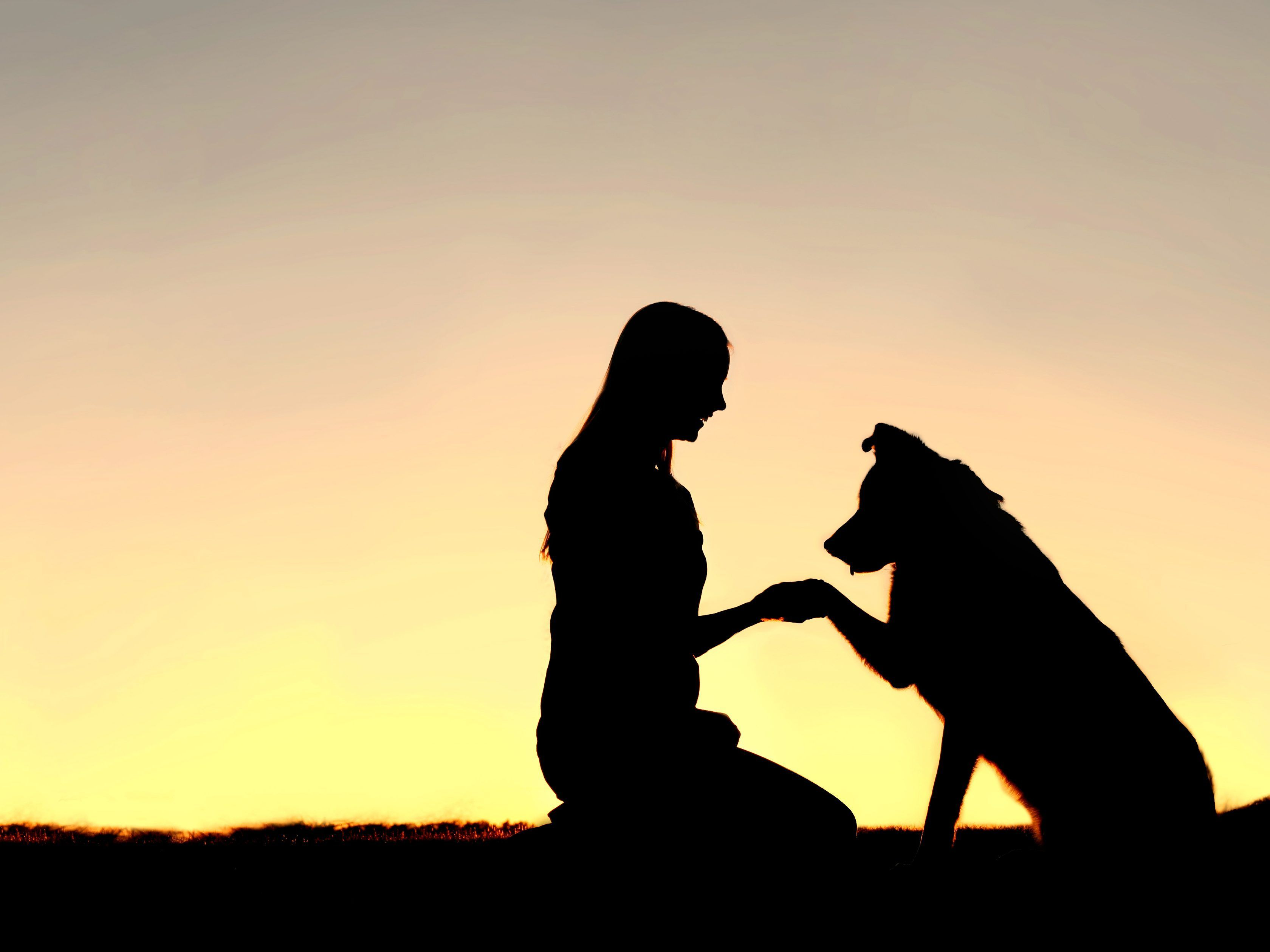 Dog Reunited With Owner After 8 Month 282 Km Journey Dog Family Pictures Dog Shaking Dog Silhouette Wallpaper cute pet dog sunset house