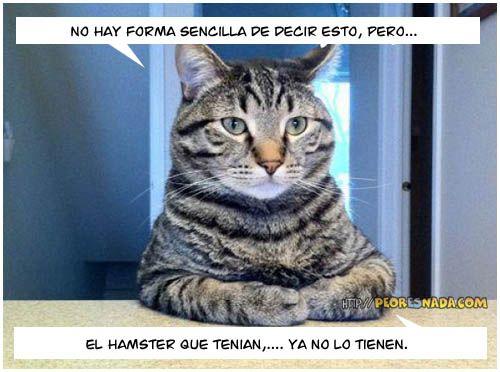 El hamster que tenían...