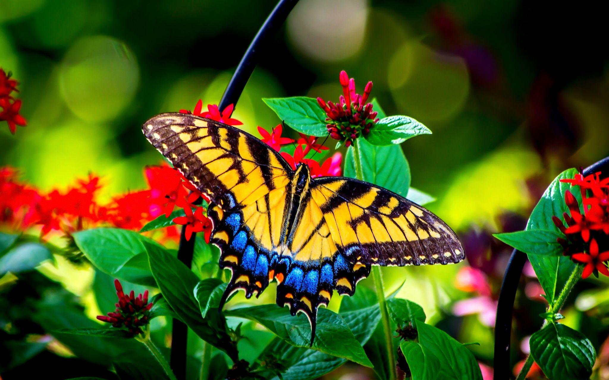 Butterflies Butterfly Garden Flowers Colors Summer Nature Greenery Beautiful Beauty Green Leaves Phone Wallpap Flower Beauty Butterfly Garden Flower Wallpaper