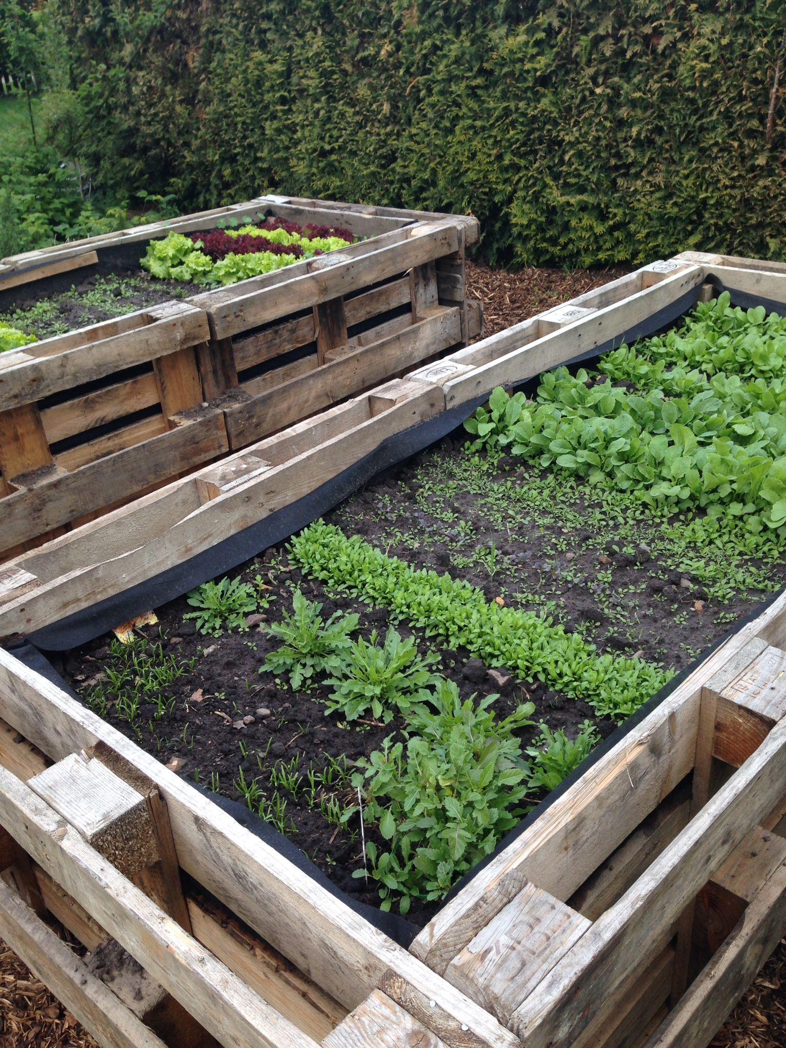 hochbeet aus europaletten garten pinterest veg garden and gardens. Black Bedroom Furniture Sets. Home Design Ideas