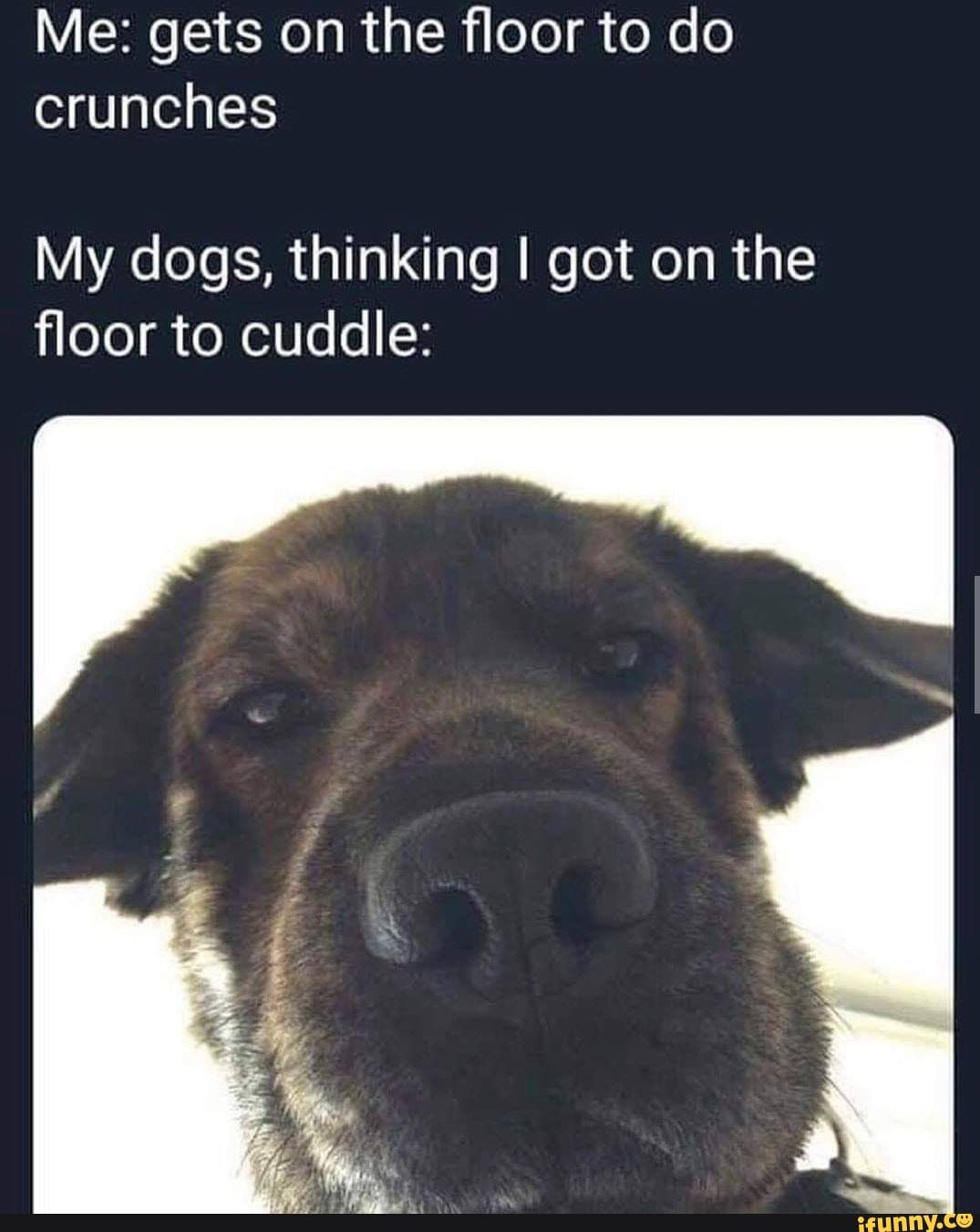 Pet Memes Clean : memes, clean, floor, Crunches, Dogs,, Thinking, Floor, Cuddle:, IFunny, Memes, Clean,, Worlds, Funniest, Memes,, Funny