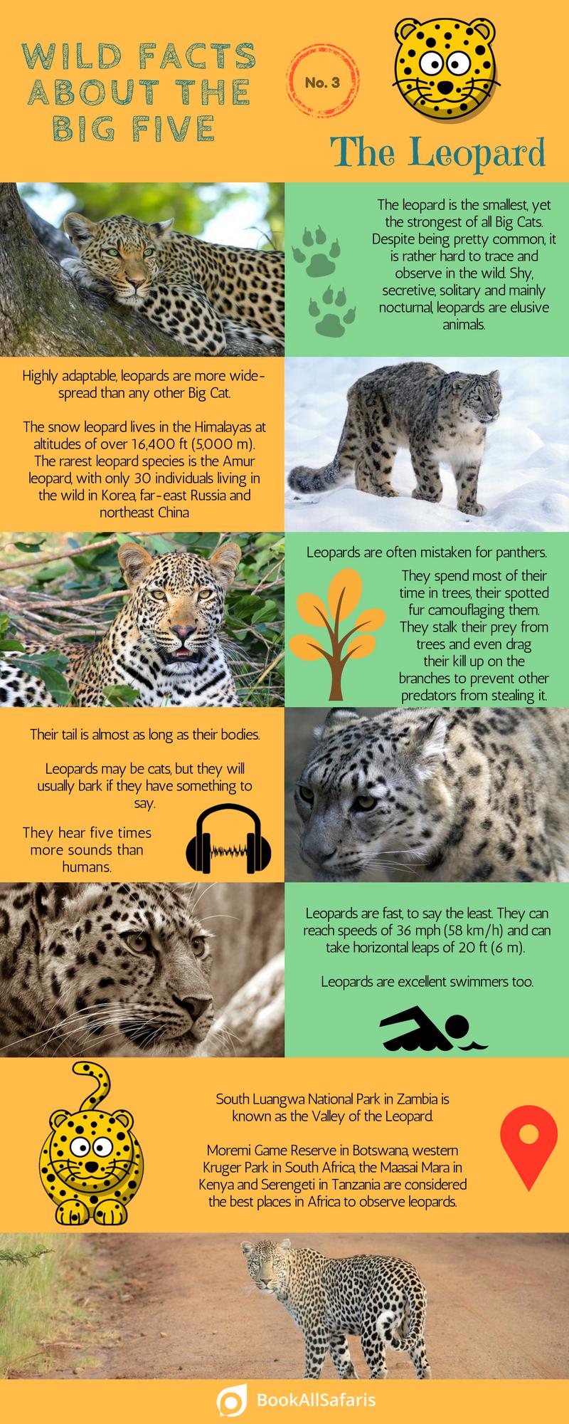 big-five-leopard-facts | The Big Five | Leopard facts