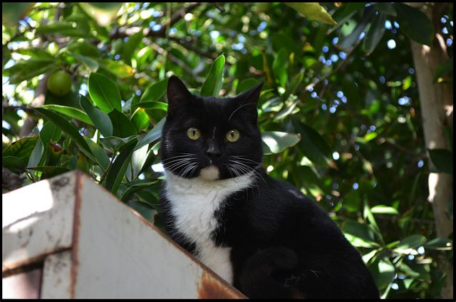 How to Help Feral Cats From Feeding & TNR to Fostering