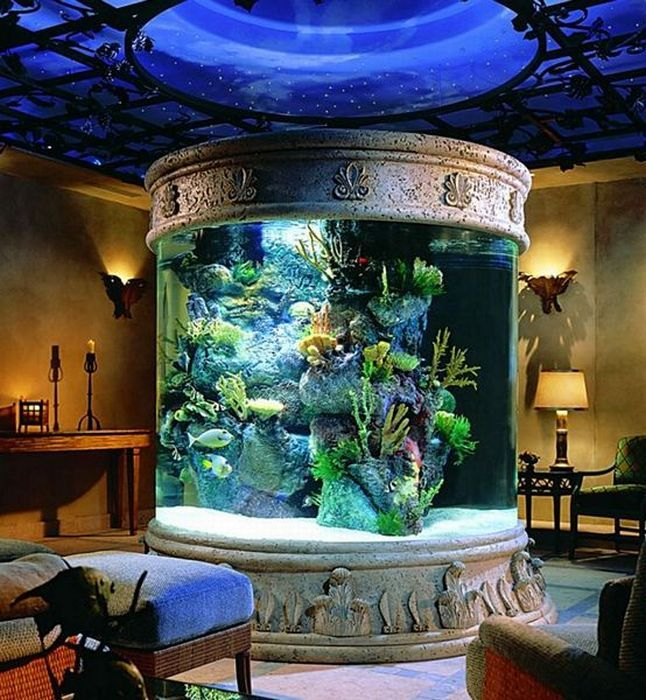 this fish tank is amazing i would love to have something like this - Fish Tank Designs My Home