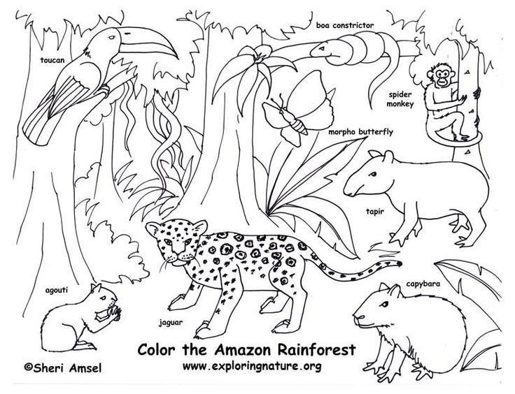 Get The Latest Free Rainforest Animals Coloring Pages Images Favorite To Print Online By ONLY COLORING PAGES