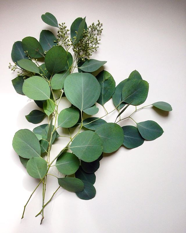 P... Artificial Silk Australian Native Flowering Eucalyptus Greenery Pod Spray