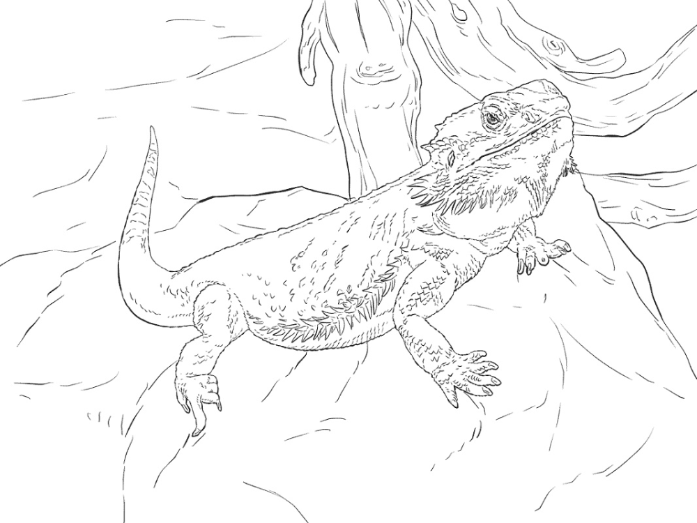 Bearded Dragon Coloring Pages Dragon Coloring Page Cool Coloring Pages Coloring Pages