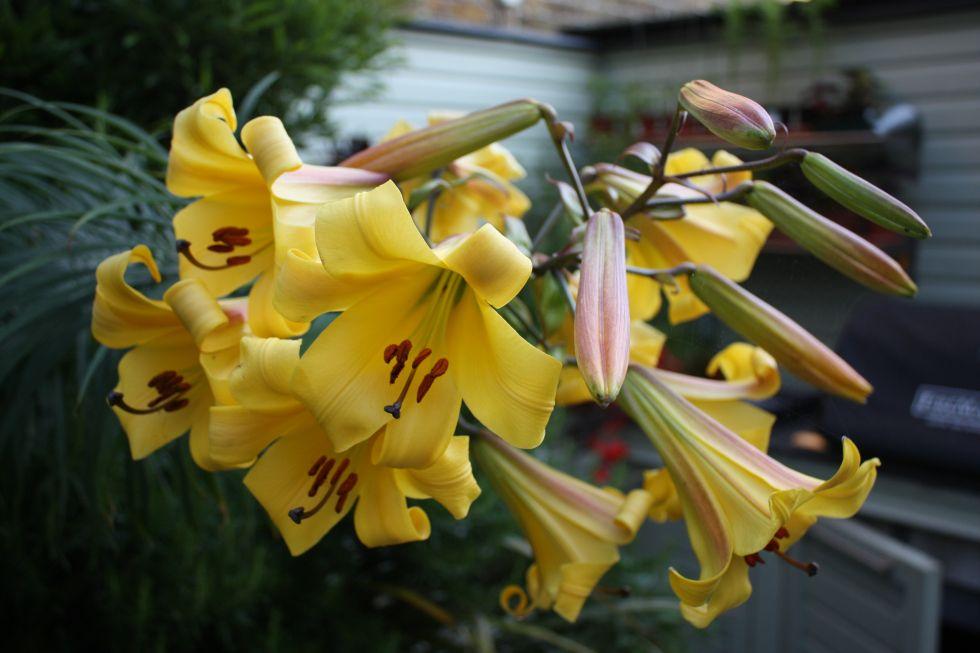 Plant List | Plants, Plant list, Variegated plants