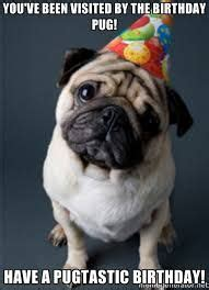 Happy Birthday Pug Memes Birthday Pug Happy Birthday Pug Pugs