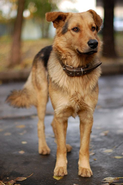 The dog by Dmitrieva