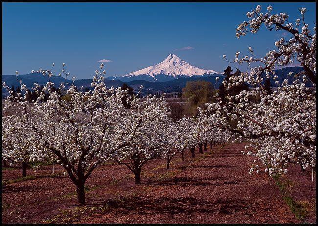 1754 Mt. Hood Spring, Oregon