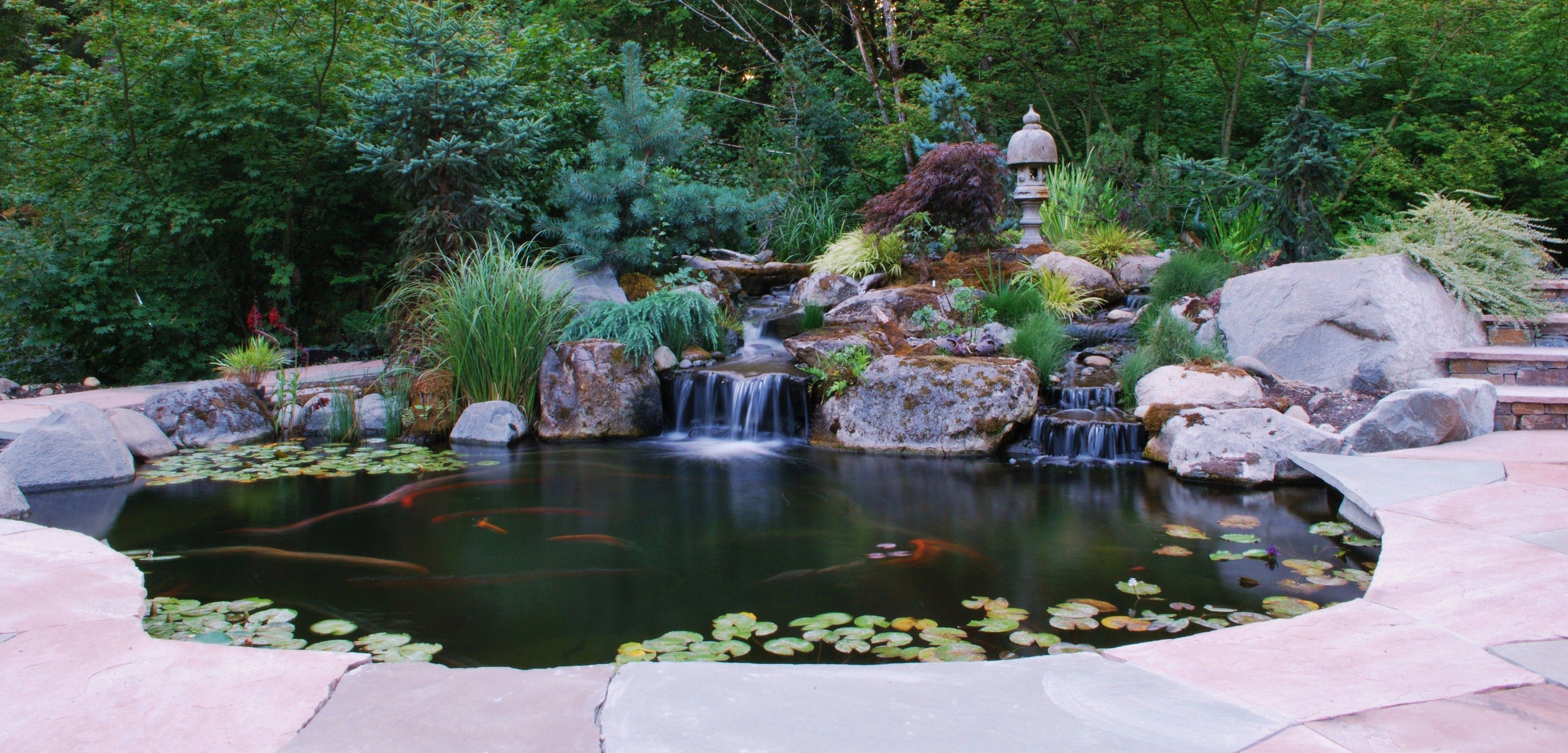 Arizona sandstone and for Backyard koi fish pond