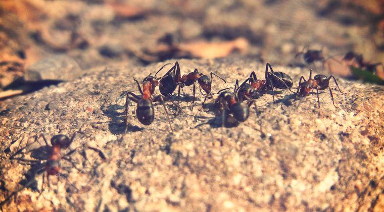 Hilfe Ameisen Invasion Welche Diy Biofalle Gegen Die Ameisenplage Wirklich Hilft Und Warum Herkommliche Ameisensprays Nicht Zu Ameisen Was Hilft Gegen Ameisen