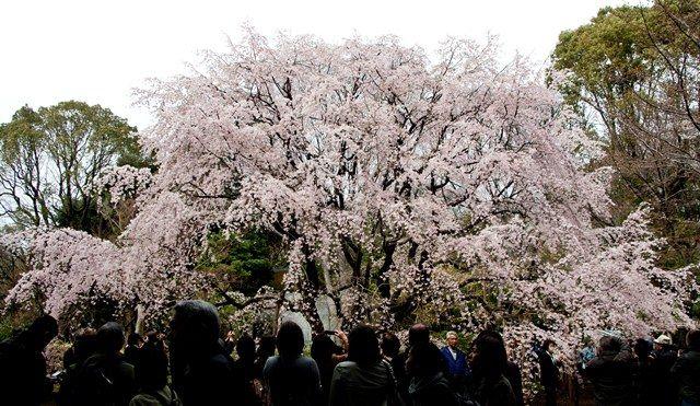 """Asukayama พาร์ค - เก่า Furukawa สวน - Rikugien - - Somail สุสาน Sugamo-Togenuki Jizo"""