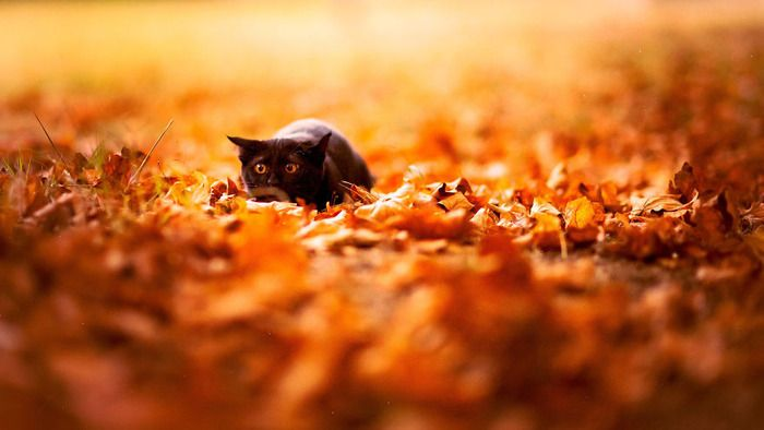 Fall With Animals Autumn Animals Animals Cute Animals