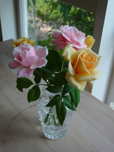 Roses can be propagated from cuttings, although they may not be as strong as their parents. Learn about this process here.