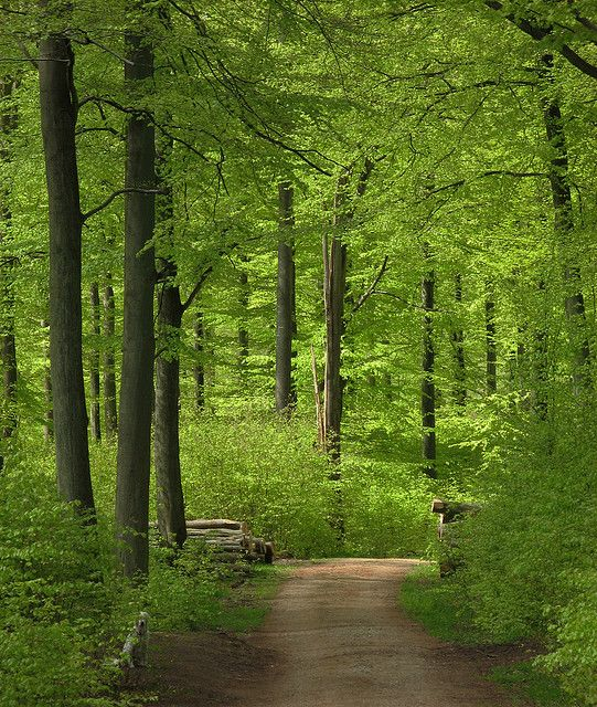 Get out and let nature take away your stress.
