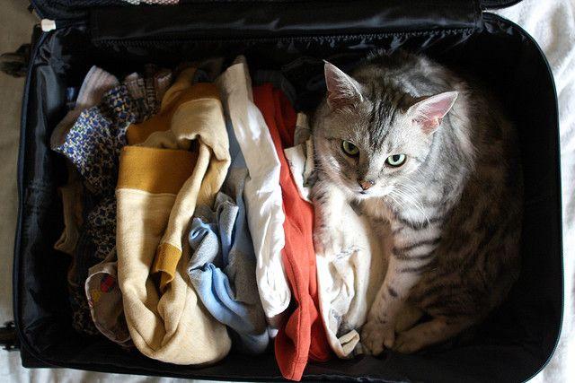 La mia tigre non si può certo lasciare a casa! #summerbag #limoni