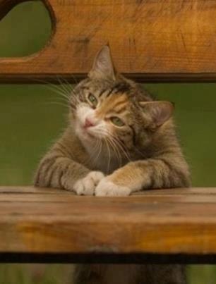. cat