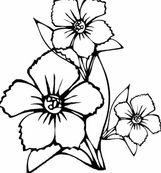 Gambar Bunga Sepatu Yang Mudah Digambar 39 Gambar Sketsa Bunga Indah Sakura Ma Flower Coloring Pages Butterfly Coloring Page Printable Flower Coloring Pages