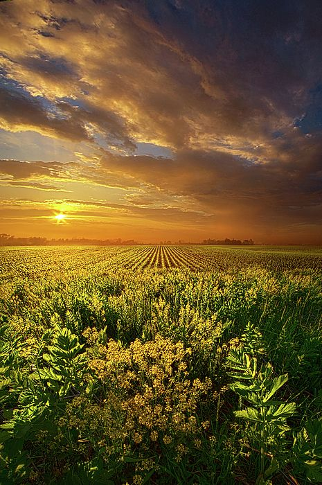 A Time Of Gifts Photograph by Phil Koch