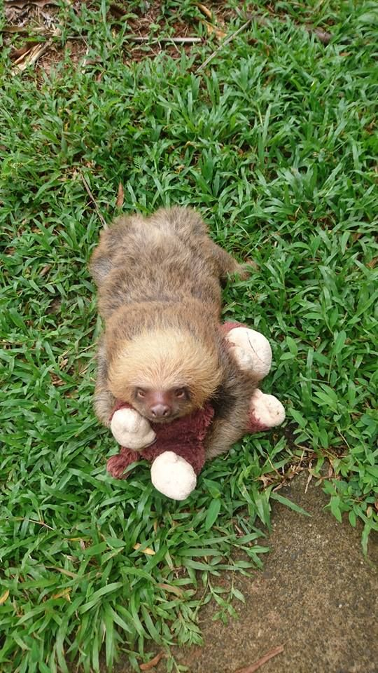 Happy Sloth Sunday That Look Of Pure Bliss When You Finally Go To The Bathroom Go Paty Cute Sloth Baby Sloth Sloth