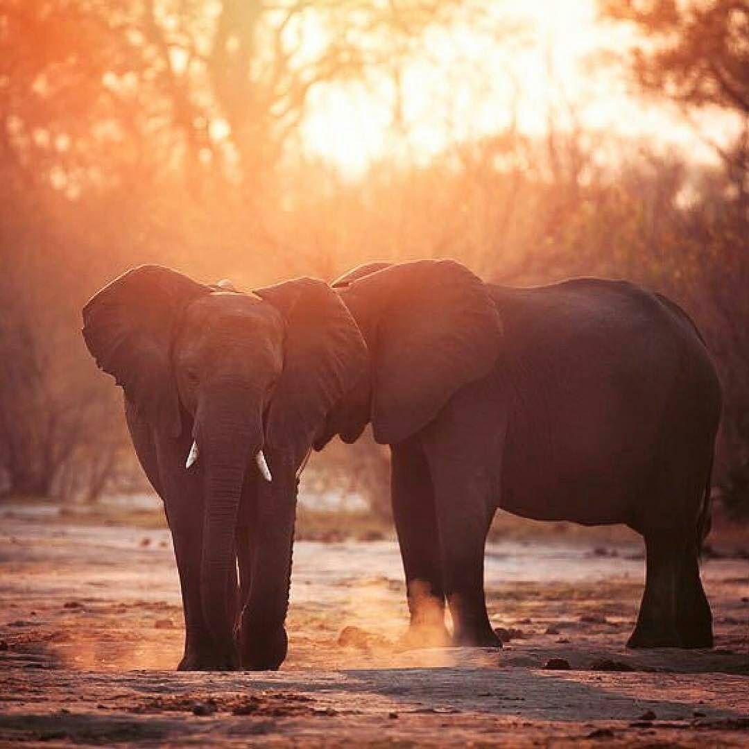 Pin de JAKY CRUZ en ELEPHANT CUTE!!! | Pinterest | Elefantes, Bien ...