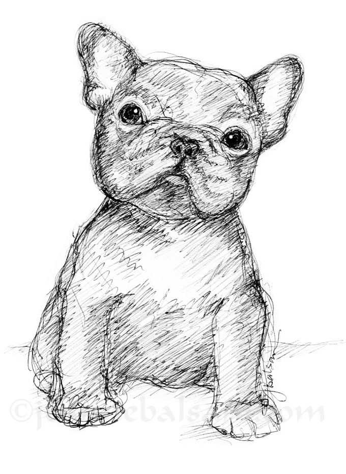 Just another little French Bulldog pup - simple pen and ink sketch