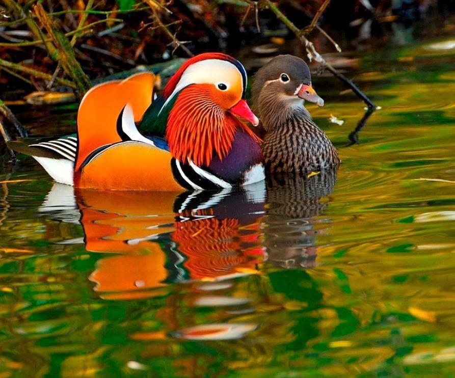 Maria Mitterer On Twitter Animals Animals Beautiful Beautiful Birds