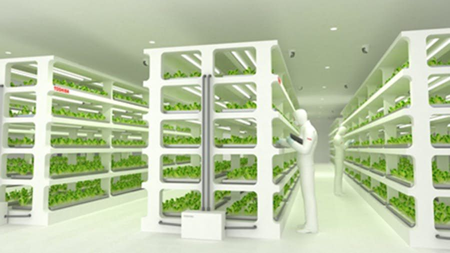 Toshiba Expands To Food Production With Indoor Vegetable Factory In 2020 Indoor Vegetables Indoor Vegetable Gardening Aquaponics
